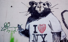 New York City rats provide a gift to virologists